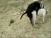 动物交配行为之公邋遢