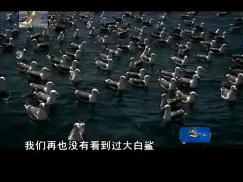 大白鲨杀手6 虎鲸vs大白鲨