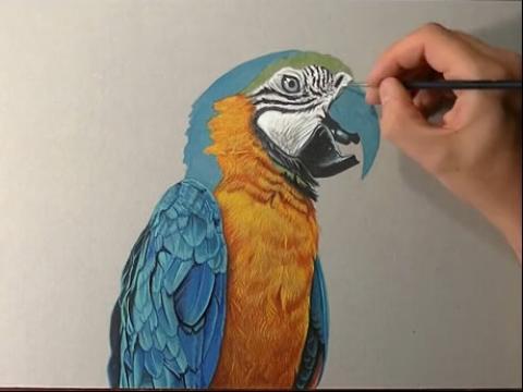 壁纸 动物 鸟 鹦鹉 480_360