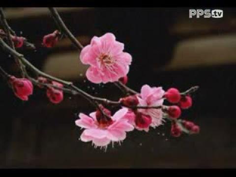 邓丽君 - 北国之春 - 日语版