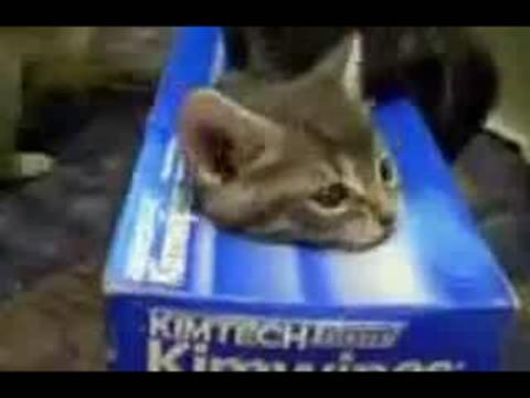 搞笑动物!可爱的猫猫.特搞笑!