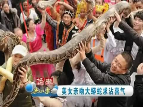 美女亲吻大蟒蛇求沾喜气