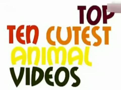 十大最可爱的动物视频
