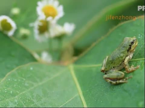 圆形简笔画动物脸谱之青蛙