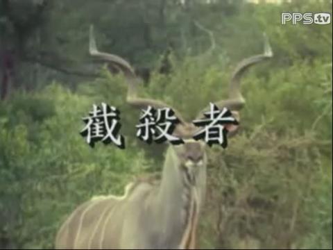 自然传奇猎_视频在线观看-爱奇艺搜索