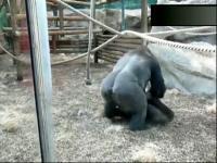 马交配 96 动物性行为超清