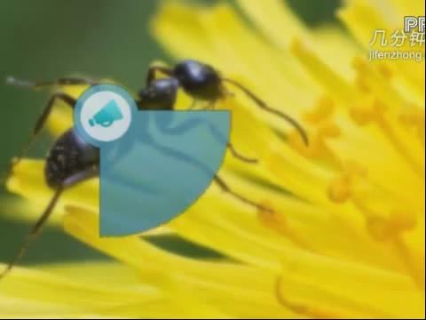 蚂蚁与树叶简笔画《蚂蚁的画法简笔画《彩色卡通蚂蚁